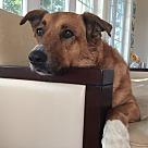 Adopt A Pet :: Sasha