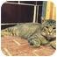 Photo 4 - Domestic Shorthair Cat for adoption in Centerburg, Ohio - Norman