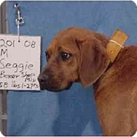 Adopt A Pet :: Seggie/Adopted! - Zanesville, OH