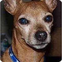 Adopt A Pet :: Awesome Pete - Toronto/Etobicoke/GTA, ON