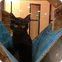 Adopt A Pet :: Darcy - Monroe, GA