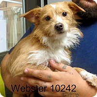 Adopt A Pet :: Webster - Greencastle, NC