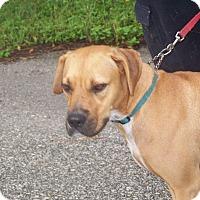 Adopt A Pet :: ASHLEY - Odessa, FL