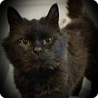 Adopt A Pet :: Boo - Newfield, NJ