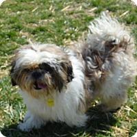 Adopt A Pet :: Truman - Prole, IA