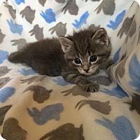 Adopt A Pet :: Georgia - Union, KY