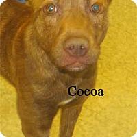 Adopt A Pet :: Cocoa - Warren, PA