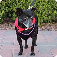 Adopt A Pet :: PEPPER - Las Vegas, NV