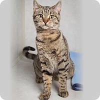 Adopt A Pet :: Destiny - Rochester, NY
