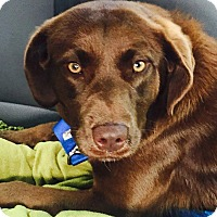 Adopt A Pet :: Lila - CUMMING, GA