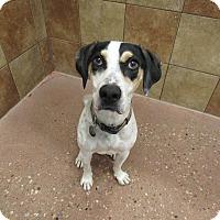 Adopt A Pet :: Harley - Appleton, WI