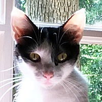 Adopt A Pet :: Susie Q - Durham, NC