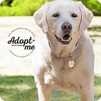 Adopt A Pet :: Dory - Phoenix, AZ
