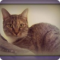 Adopt A Pet :: Rue Bee - Laconia, IN