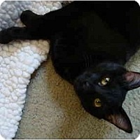 Adopt A Pet :: Cinder - Davis, CA