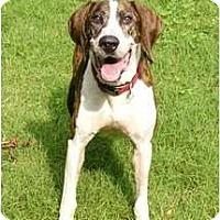 Adopt A Pet :: Michael - Mocksville, NC