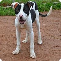 Adopt A Pet :: Dara - Athens, GA