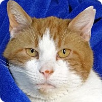 Adopt A Pet :: Dreamsicle - Renfrew, PA