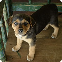 Adopt A Pet :: Sparkle - San Antonio, TX
