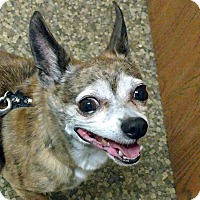 Adopt A Pet :: Peanut - Adoption Pending - Farmington Hills, MI