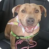 Adopt A Pet :: Honey - Woodstock, GA