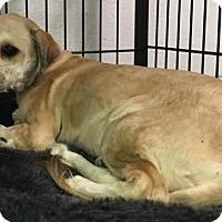 Adopt A Pet :: Jewels - Savannah, GA