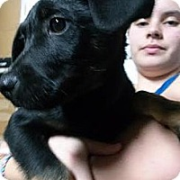 Adopt A Pet :: Adrian - South Jersey, NJ