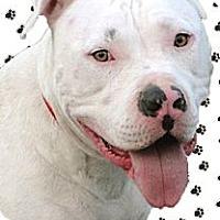 Adopt A Pet :: Huey good with everyone - Sacramento, CA