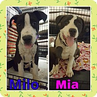 Adopt A Pet :: Milo and Mia - Sacramento, CA
