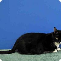 Adopt A Pet :: BRILEY - Naples, FL
