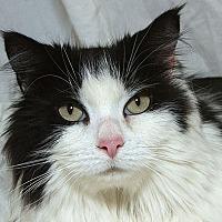 Adopt A Pet :: Timothy L - Sacramento, CA