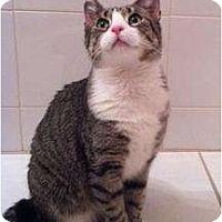 Adopt A Pet :: Lu Lu - New York, NY