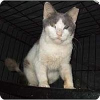 Adopt A Pet :: Bailey - Fort Lauderdale, FL