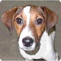 Adopt A Pet :: Horton - New York, NY