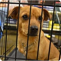 Adopt A Pet :: Chyna - Duluth, GA