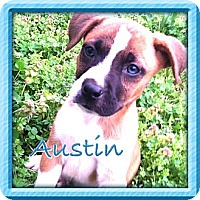 Adopt A Pet :: Austin - Somers, CT