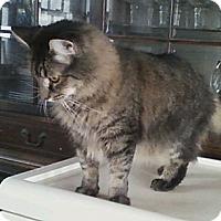 Adopt A Pet :: Sophia - Warminster, PA