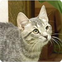 Adopt A Pet :: Ginger - Naples, FL