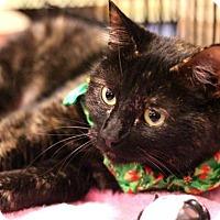 Adopt A Pet :: Suzy Q - Sacramento, CA