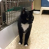 Adopt A Pet :: Marv(elous) - Colmar, PA