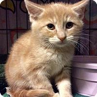 Adopt A Pet :: Cupid - East Brunswick, NJ