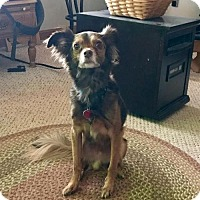 Adopt A Pet :: Santino - Seaford, DE