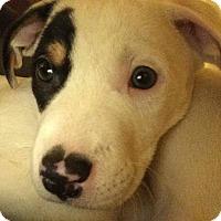 Adopt A Pet :: Petey - Bernardston, MA