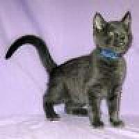 Adopt A Pet :: Morgan - Powell, OH