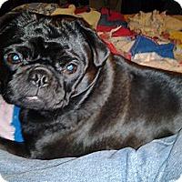 Adopt A Pet :: Josie - Hinckley, MN