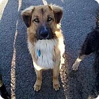Adopt A Pet :: Zeus - New Boston, NH