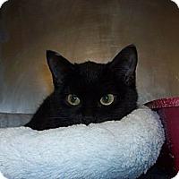 Adopt A Pet :: celeste - El Cajon, CA
