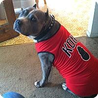 Adopt A Pet :: BLEW - Ojai, CA