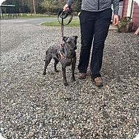 Adopt A Pet :: Aria - Surrey, BC