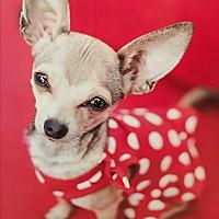 Adopt A Pet :: Girlie - Rancho Santa Fe, CA